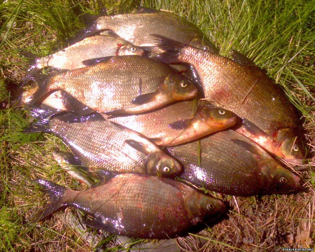 свирь места для рыбалки