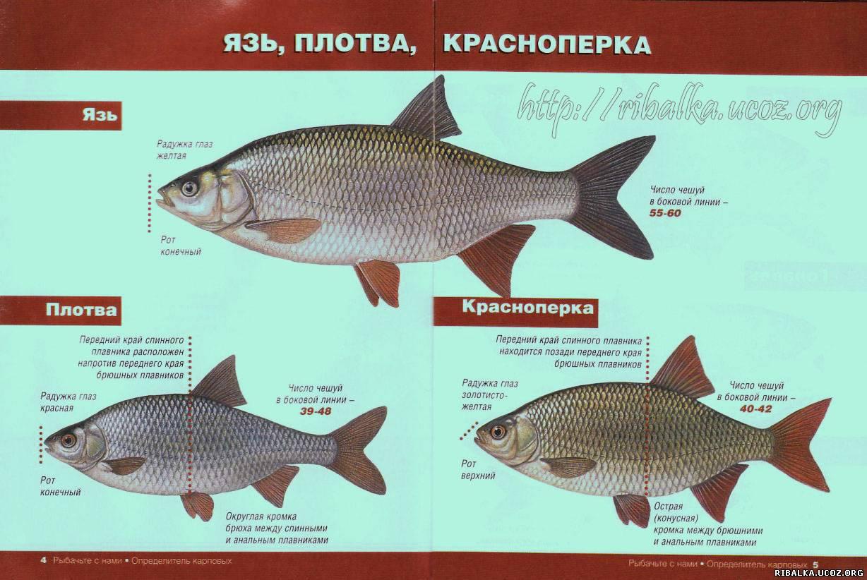 различия рыбалок