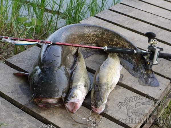отчет рыбалке район иловли на дону