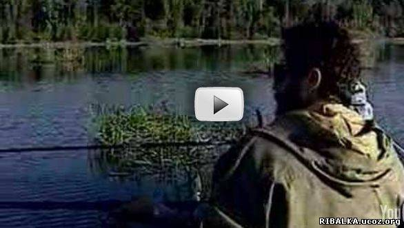 диологиорыбалке ловля