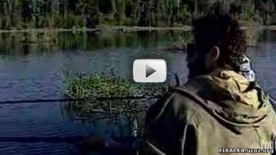 Диалоги о рыбалке - ловля карася на Нарских прудах