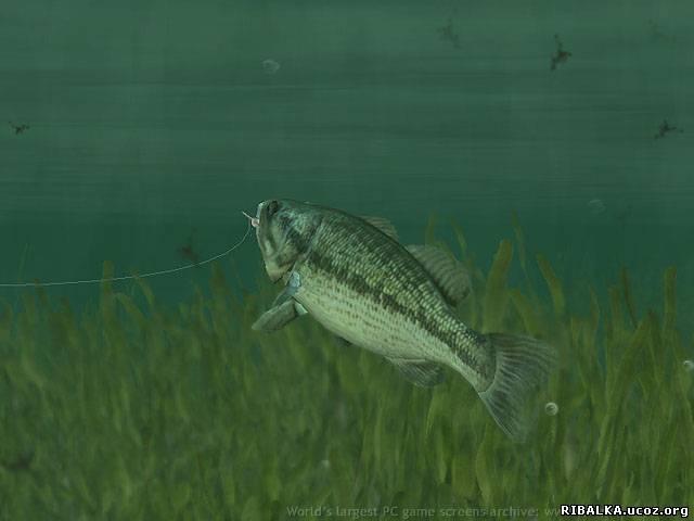 Rapala fish
