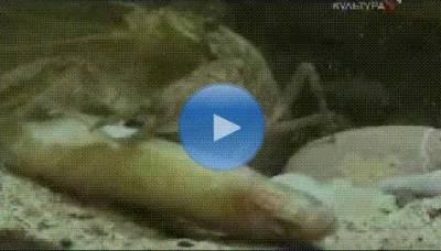 Четыре времени года под водой (фильм о жизни щуки)