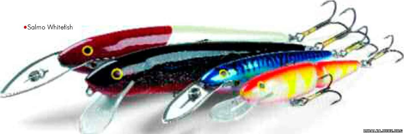 Salmo Whitefish