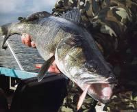Рыбалка на балансиры осенью в отвес