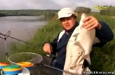 Фидер и пикер на реке
