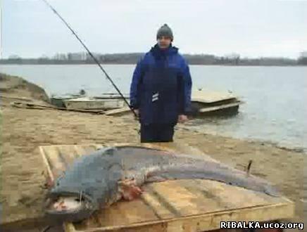 рыбалка видео сом