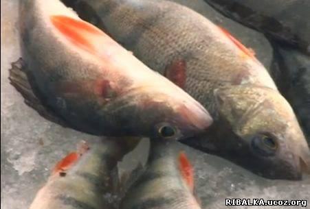 Зимняя рыбалка видео смотреть онлайн
