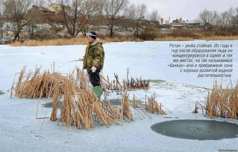 на что ловится зимой толстолобик