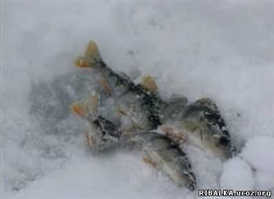 Видео Рыбалка в Подмосковье зимой
