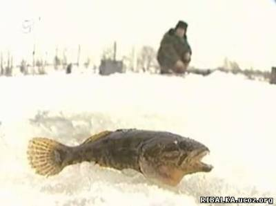 Видео Ловля ротана зимой