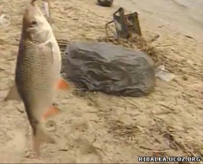 Ловля плотвы весной на реке Днепр