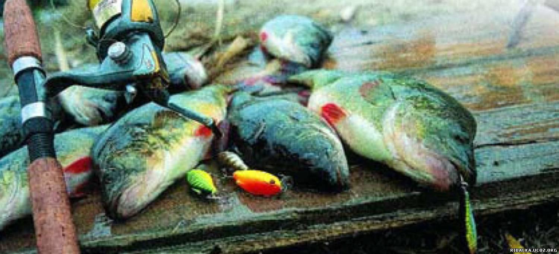 какая рыба клюёт на волге сегодня