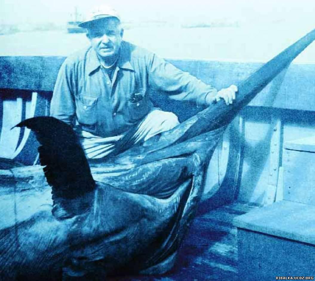 большая рыба-меч