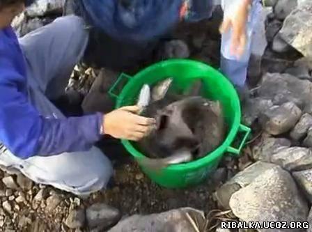 Видео о рыбалке на фидер рыбалка