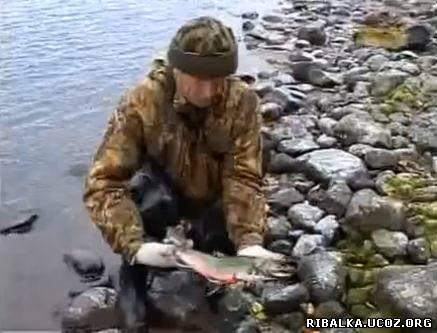 Рыбалка на камчатке видео смотреть