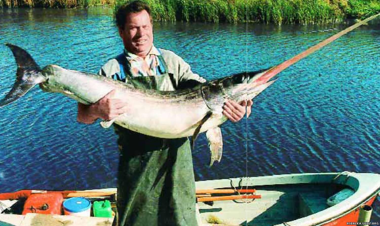 ловля рыбы - меча