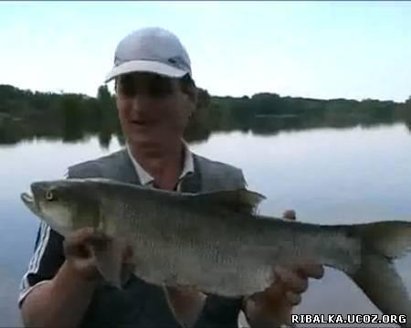 Ловля рыбы на фидер видео