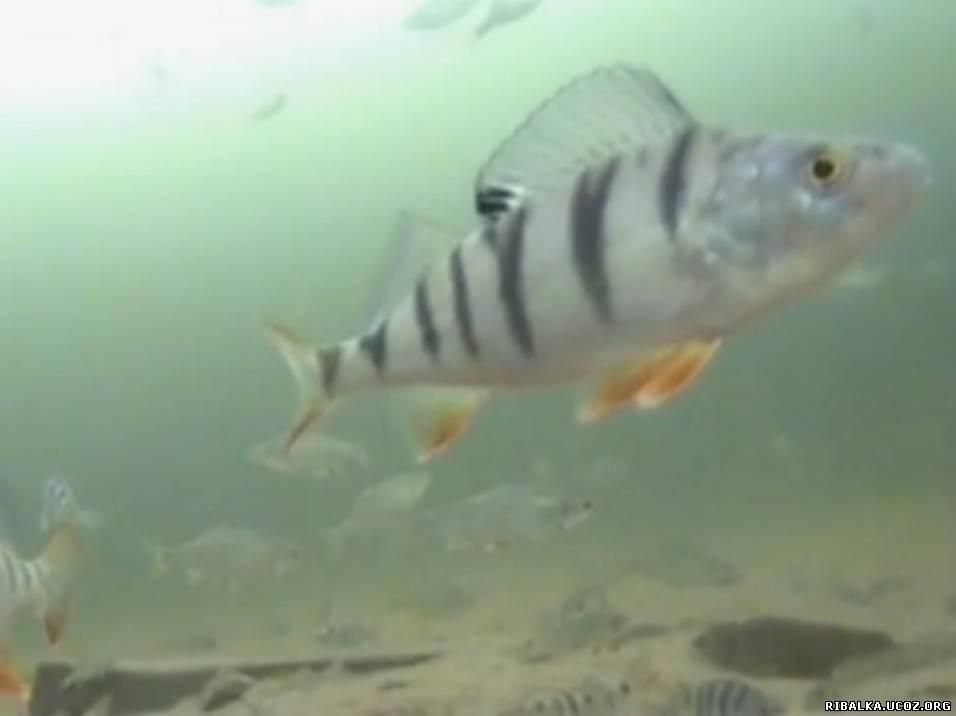 Рыбалка взгляд под лёд видео смотреть