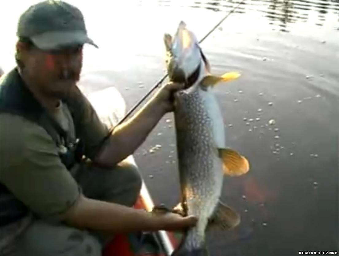 рыбалка на спиннинг вопрос