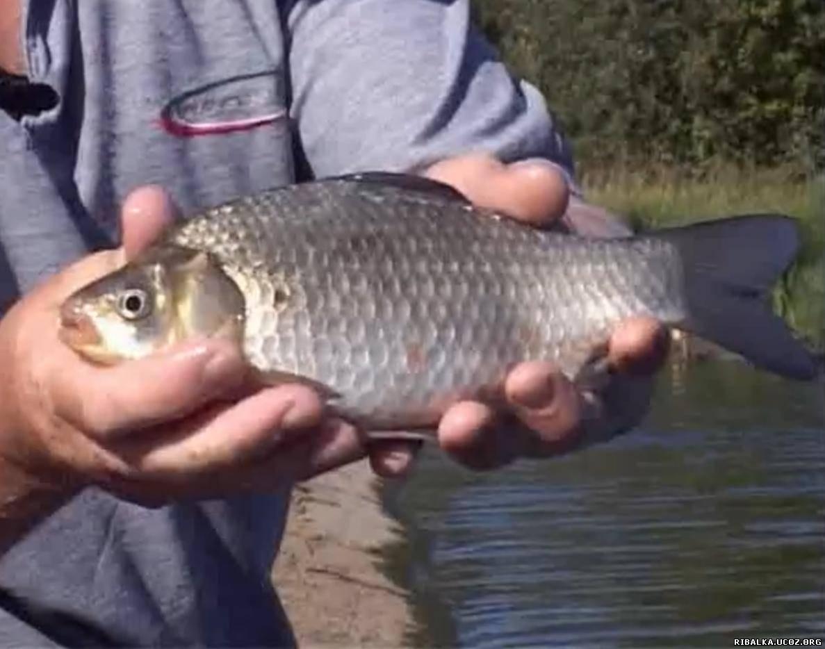 Ловля карася осенью видео смотреть онлайн