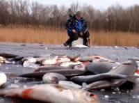 Видео Плотва на мормышку по последнему льду