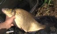 Видео Рыбачьте с нами, октябрь 2012 (маленький рыбачок)
