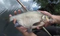 Видео Рыбачьте с нами, сентябрь 2012 (поплавочная удочка на Пахре)