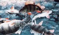 Зимняя рыбалка со льда